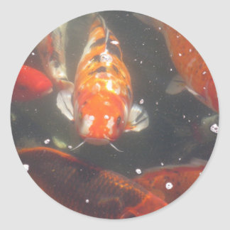 Koi Fish glide among the still green  waters Classic Round Sticker