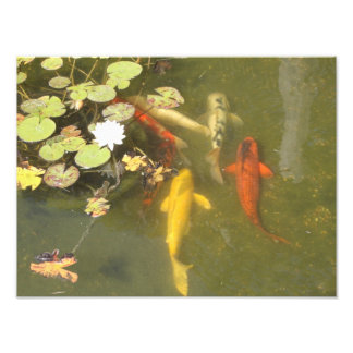 Koi Fish in a Lily Pond Photo Print