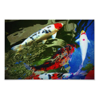 Koi Fish Photo Print