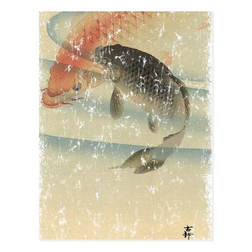 Koi Post Cards