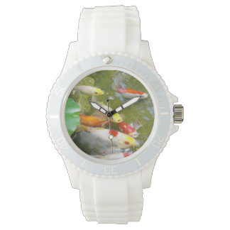 Koi Watch