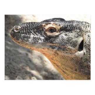 Komodo Dragon Postcard
