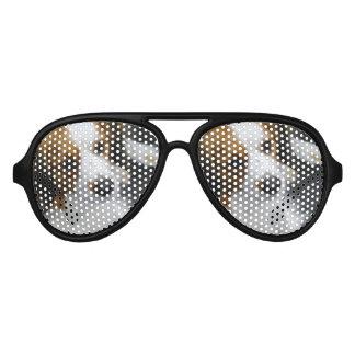 Kooikerhondje Dog Aviator Sunglasses