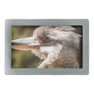 Kookaburra Belt Buckles