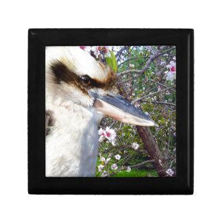 Kookaburra Beside Blossom Tree, Gift Box