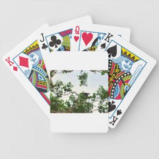 KOOKABURRA IN FLIGHT QUEENSLAND AUSTRALIA BICYCLE PLAYING CARDS