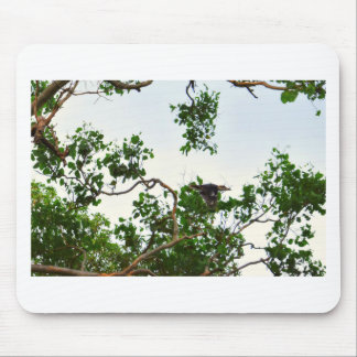 KOOKABURRA IN FLIGHT QUEENSLAND AUSTRALIA MOUSE PAD