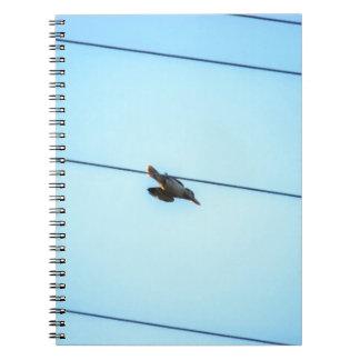 KOOKABURRA IN FLIGHT QUEENSLAND AUSTRALIA NOTEBOOKS