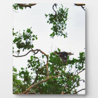 KOOKABURRA IN FLIGHT QUEENSLAND AUSTRALIA PLAQUE