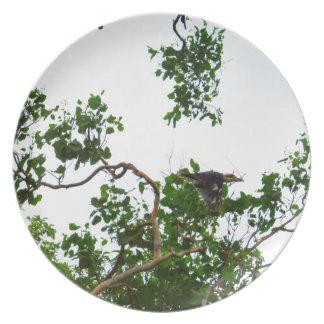 KOOKABURRA IN FLIGHT QUEENSLAND AUSTRALIA PLATE