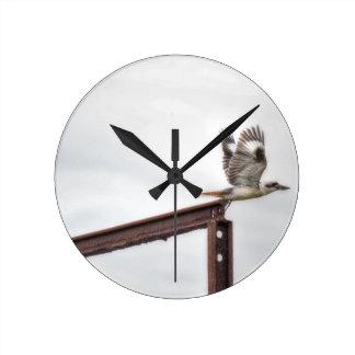 KOOKABURRA IN FLIGHT QUEENSLAND AUSTRALIA ROUND CLOCK