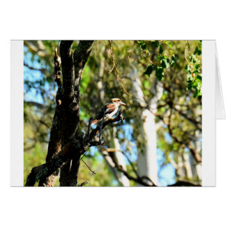 KOOKABURRA IN TREE QUEENSLAND AUSTRALIA CARD