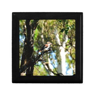 KOOKABURRA IN TREE QUEENSLAND AUSTRALIA GIFT BOX