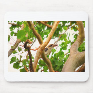 KOOKABURRA IN TREE QUEENSLAND AUSTRALIA MOUSE PAD