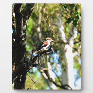 KOOKABURRA IN TREE QUEENSLAND AUSTRALIA PLAQUE