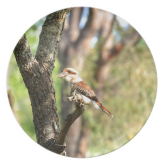 KOOKABURRA IN TREE QUEENSLAND AUSTRALIA PLATES