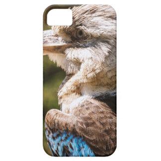 Kookaburra iPhone 5 Case