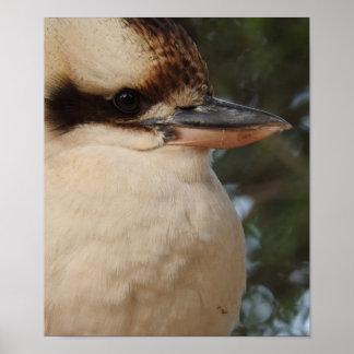 Kookaburra Poster