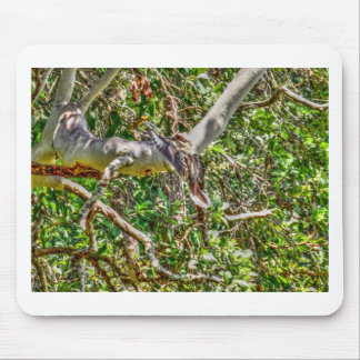 KOOKABURRA QUEENSLAND AUSTRALIA ART EFFECTS MOUSE PAD