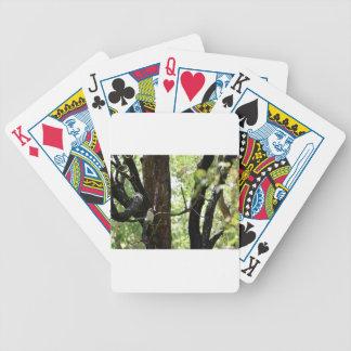 KOOKABURRA QUEENSLAND AUSTRALIA BICYCLE PLAYING CARDS