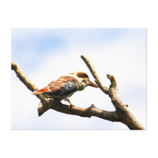KOOKABURRA QUEENSLAND AUSTRALIA CANVAS PRINT