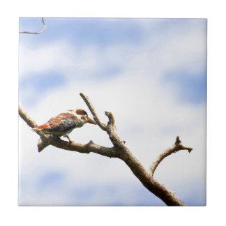 KOOKABURRA QUEENSLAND AUSTRALIA TILE