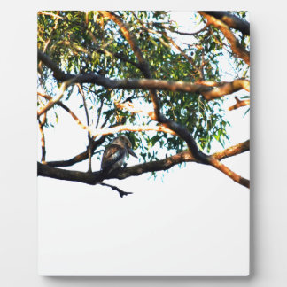 KOOKABURRA RURAL QUEENSLAND AUSTRALIA PLAQUE