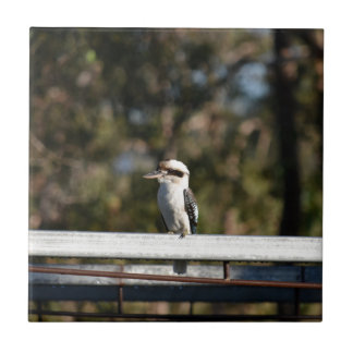KOOKABURRA RURAL QUEENSLAND AUSTRALIA TILE