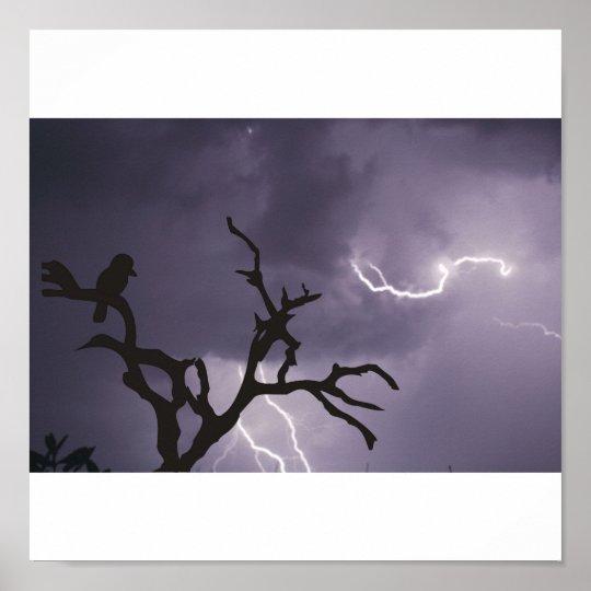 Kookaburra Storm Poster