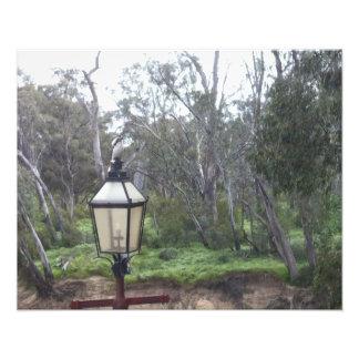 Kookaburra sur la copie de courrier de lampe (coll photographie d'art
