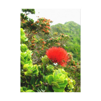 Koolau Mountains Canvas Print