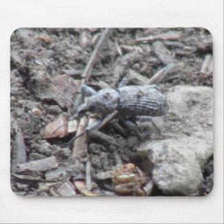 Kooskooskia Idaho Insects Arachnids Spiders Mouse Pads