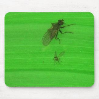 Kooskooskia Idaho Insects Arachnids Spiders Mousepad