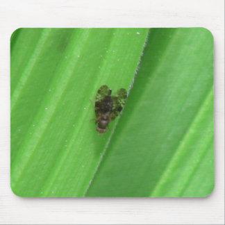 Kooskooskia Idaho Insects Arachnids Spiders Mouse Pad