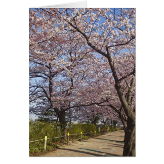 Korea, Seoul, Yeouido, Cherry blossoms on Card
