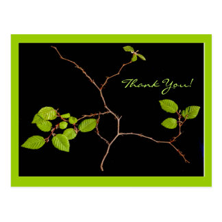 Korean Hornbeam bonsai thank you Postcard