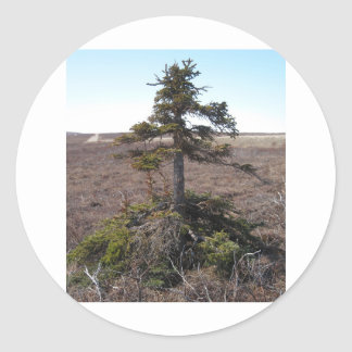 kotz shrub in alaska classic round sticker