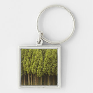Koya Sugi Cedar Trees Silver-Colored Square Keychain