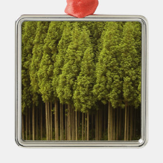 Koya Sugi Cedar Trees Silver-Colored Square Ornament