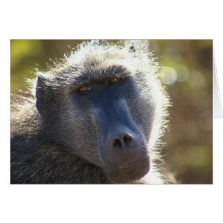 Kruger Baboon Card