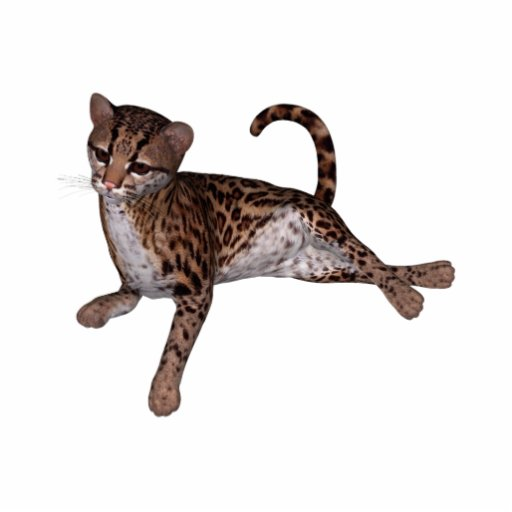 KRW Baby Leopard Magnet Photo Cutouts