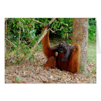 Kusasi, Famous Orangutan King at Camp Leakey Card
