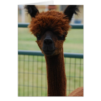Kuzco Alpaca Greeting Card