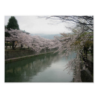 Kyoto cherry blossoms poster