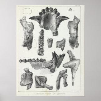 L Coryphodon Poster
