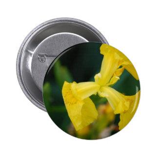 L iris jaune fleurit le bouton badges