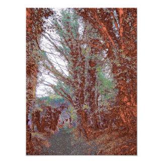 La copie de photo couleur de chemin