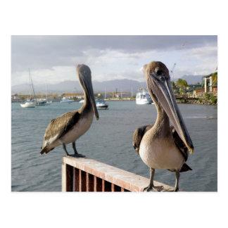 La Guancha en Ponce Postcard