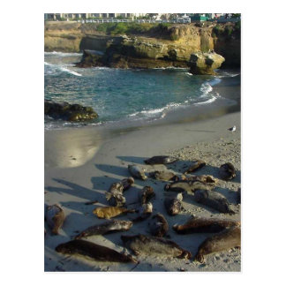 La Jolla Cove Beach Waves Sand Seals Postcard