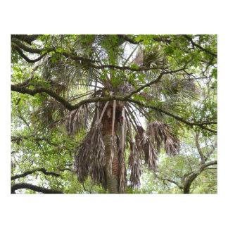 la paume de sabal par le chêne vivant s'embranche prospectus 21,6 cm x 24,94 cm
